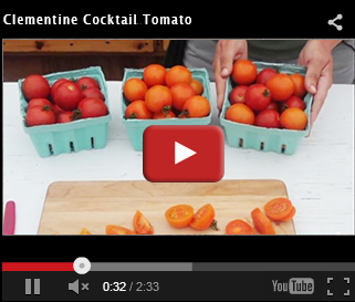 Clementine Cocktail Tomato