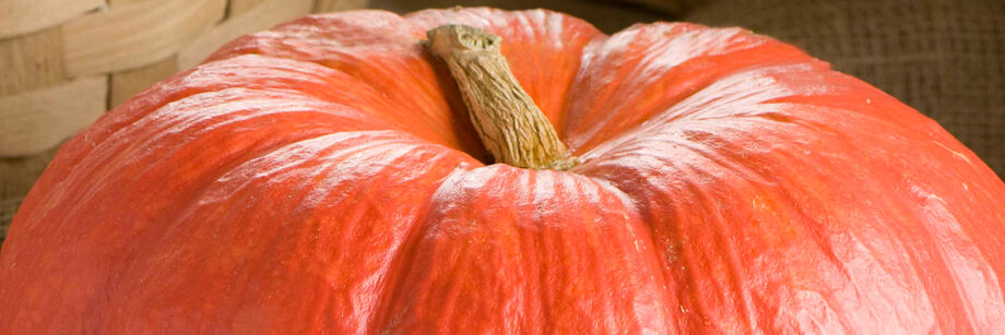Close-up of the bright red top and stem of one of our specialty pumpkin varieties.