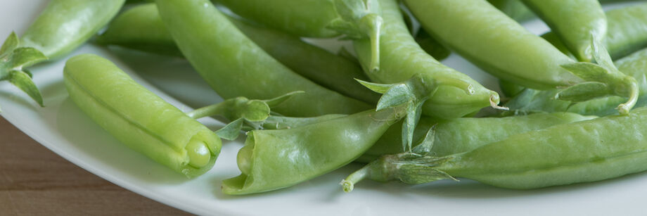 Pods of one of our snap pea varieties shown on a white plate.