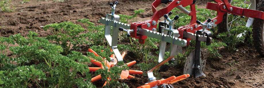 A Terrateck wheel hoe with finger weeders being used to cultivate around rows of parsley.