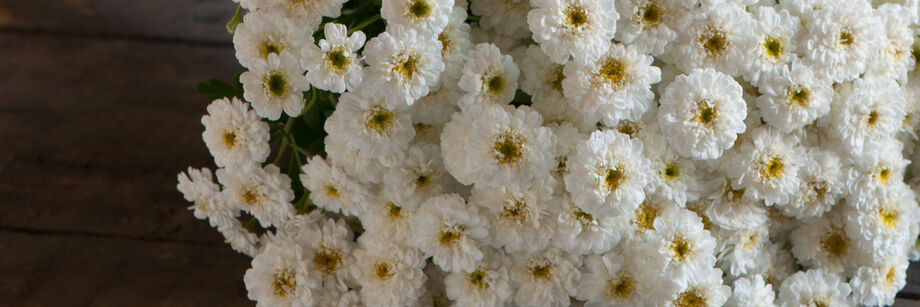 A bouquet of small white feverfew flowers.