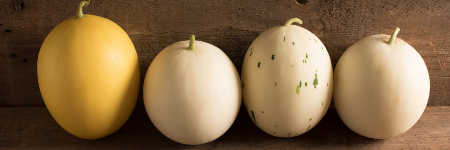 Four melons, each grown from the seeds of a different honeydew melon variety. Skin colors vary from yellow to white to pixelated.