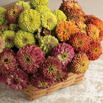 Zinnias for Bouquets