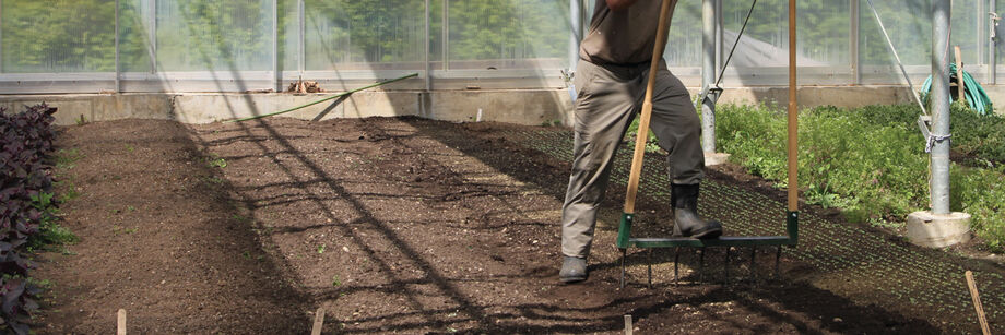 Man loosening and aerating the soil in a greenhouse using a broadfork.