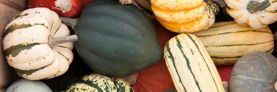 A mix of different winter squash in a harvest bin.