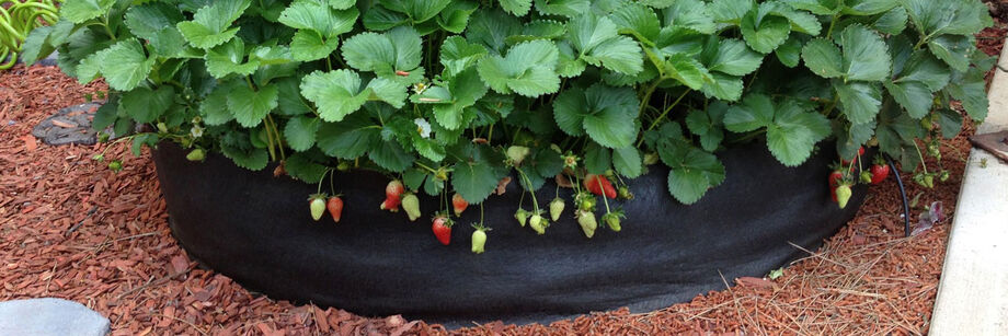 A fabric raised bed planter with fruiting strawberry plants growing in it.