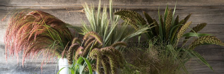 Grasses, Ornamental