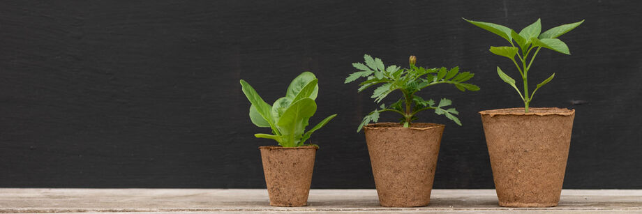 Three round biodegradable pots with plants growing in them, ordered small to large.