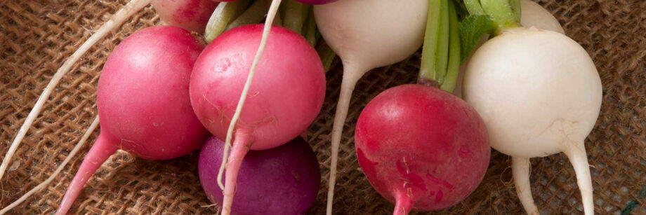 Freshly washed round radish roots in a rainbow of colors.