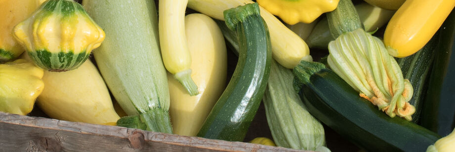 A mix of summer squash colors and shapes, all grown from Johnny's summer squash seeds.