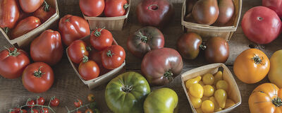 10 Tips for Growing Heirloom Tomatoes