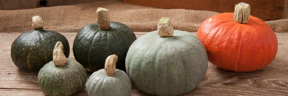 Several kabocha squash grown from Johnny's winter squash seeds—two green, three gray, and one red.