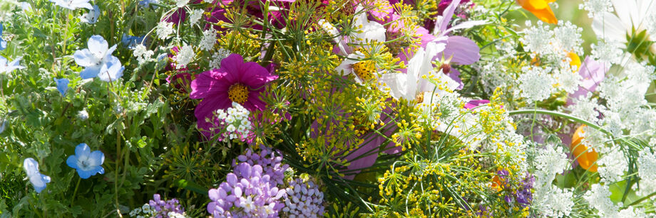 A jumble of colorful flowers grown from Johnny's wildflower seed mixes.