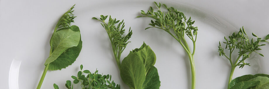 Delicate pea tendrils and leaves on a white plate.