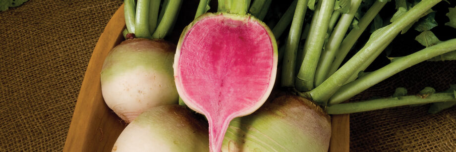 Watermelon radishes. One is cut open to reveal the bright pink interior.