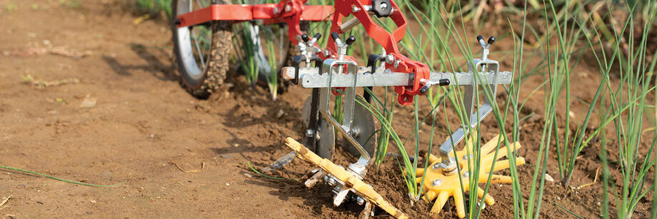 A terrateck double wheel hoe with finger weeders is being used to cultivate both sides of a row of onions.
