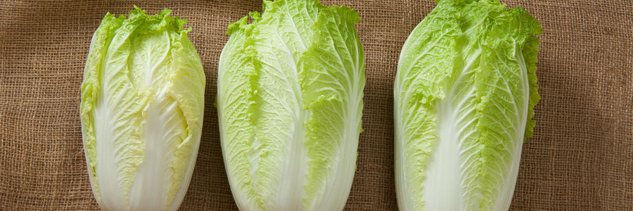 Three heads of Chinese cabbage, grown from 3 different Chinese cabbage seed varieties, laid out on a burlap sack.