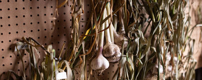Get Your Garlic On!