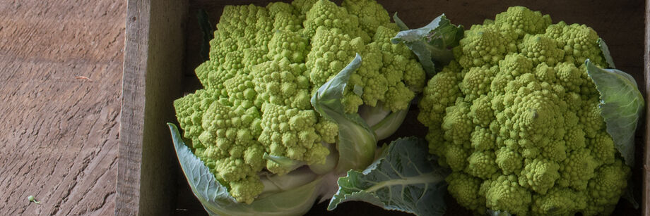 Image result for romanesco seeds