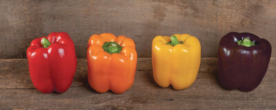Johnny's Peppers: Offering up a Wealth of Diversity