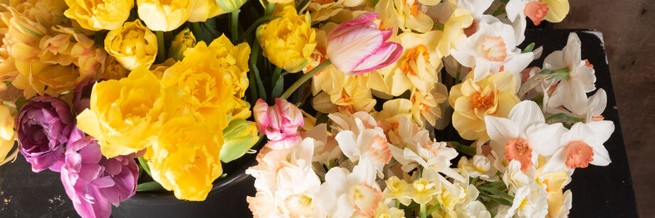 Yellow, purple, pink, and white tulip and daffodil flowers, cut and in buckets.
