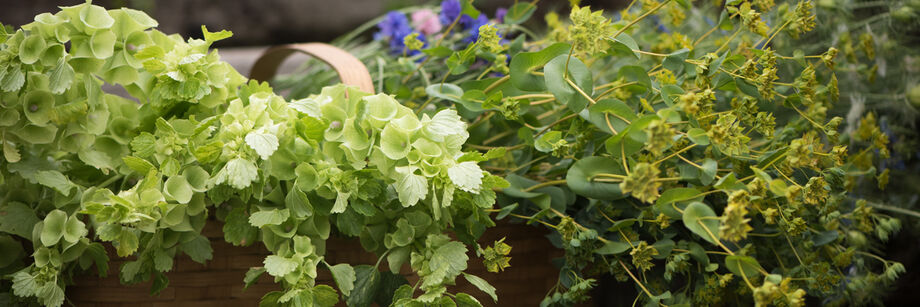Bunches of bupleurum and bells of Ireland, two types of filler flowers offered by Johnny's.