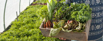 Get Ready for a Successful Winter Harvest