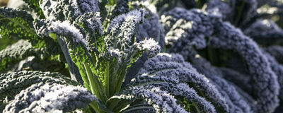 Winter: What to Plant, When