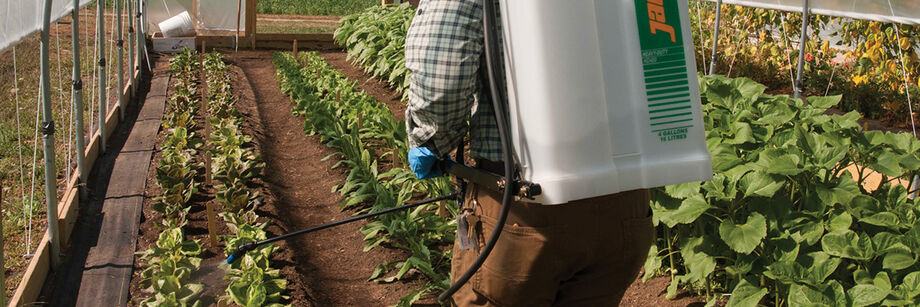 Person spraying organic pesticide in a greenhouse, using a backpack sprayer.