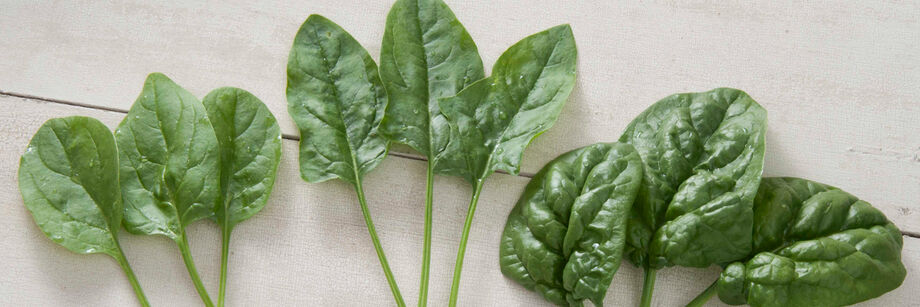 Several individual spinach leaves, grown from Johnny's spinach seeds, showing smooth-leaf and savoyed-leaf spinach types.