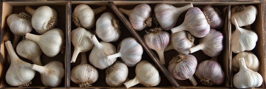 Wooden boxes filled with seed garlic.