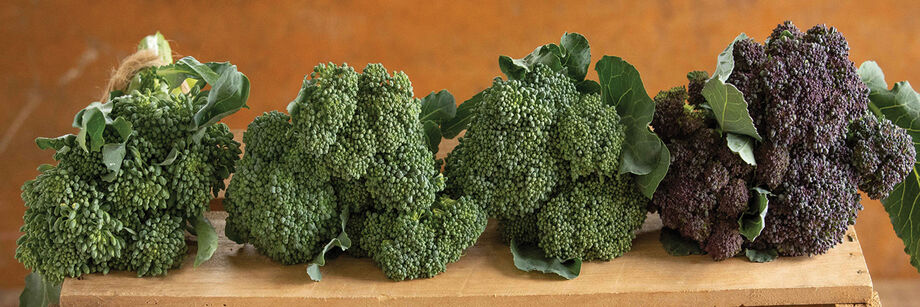 Johnny's mini-broccoli varieties bunched and displayed on a cutting board: three green varieties and one purple variety.