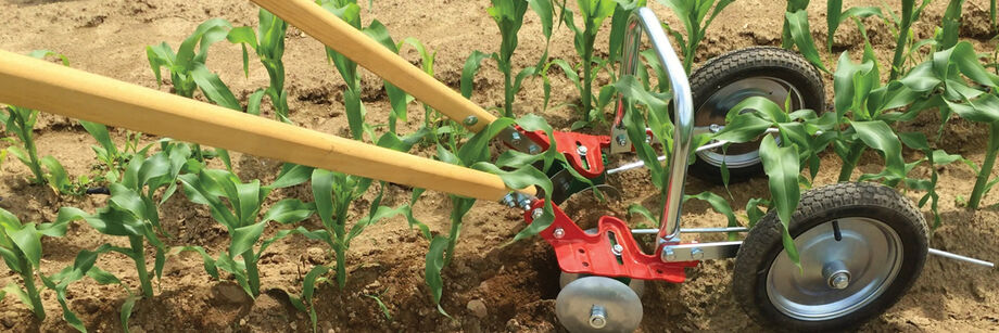 The U-bar double wheel hoe being used to cultivate around young sweet corn plants.