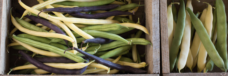 Wooden boxes filled with green, yellow, and purple beans grown from Johnny's bean seeds.