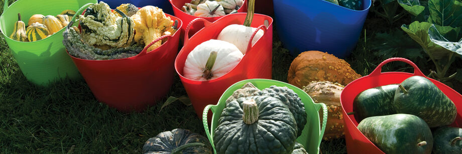 Several gorilla tubs (formerly called Tubtrugs) in green, red, and blue. Each is filled with winter squash and gourds.
