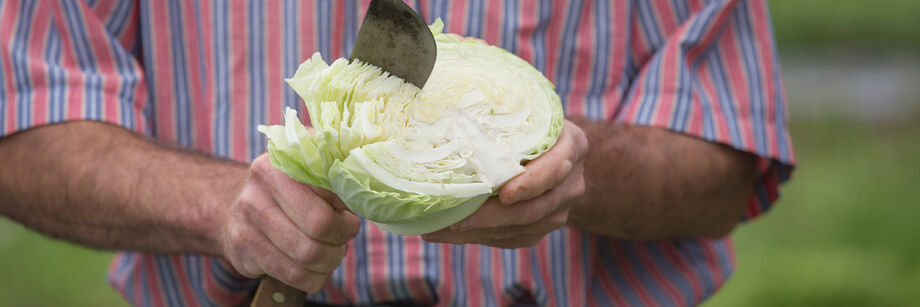 Man holding and slicing a head of cabbage from one of Johnny's cabbage varieties.