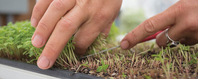 Year-Round Microgreens Production
