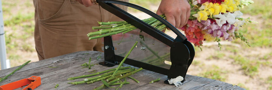 Person using a floral stem cutter to trim the stems of snapdragons.