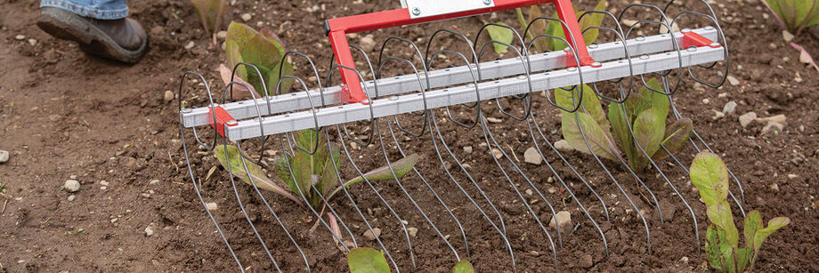 Tine weeder being used to cultivate around lettuce plants.