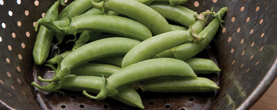 How We Help Preserve the Seed Quality of Your Favorite Peas