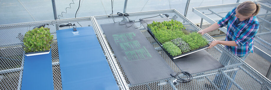 An overhead view of several heat mats laid out on greenhouse tables.