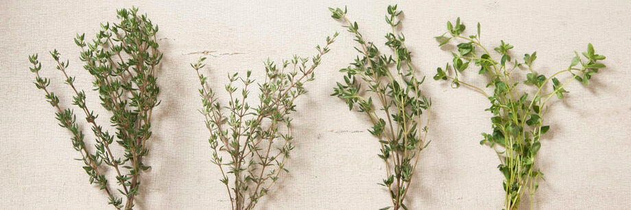 Sprigs of thyme from four of our thyme varieties.