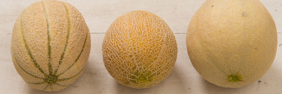 Three cantaloupes of varying sizes, each grown from one of Johnny's cantaloupe varieties.