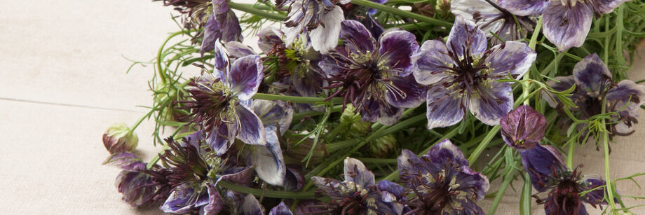 A bouquet of the blue-gray flowers of one of our nigella varieties.