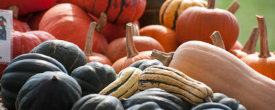 How to Choose Fall Cucurbits