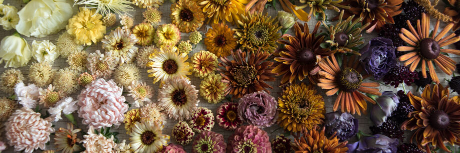 Flowers, grown from our flower seeds, arranged on a wood board in a gradient of colors from light to dark.