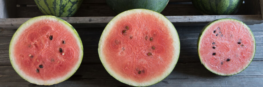 Diploid Watermelons
