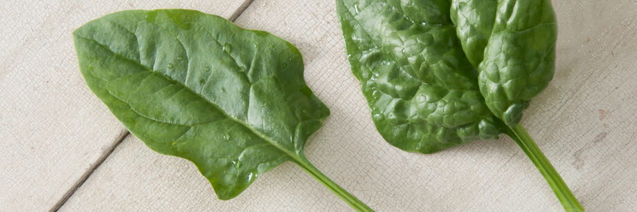 Two individual arrowhead spinach leaves.