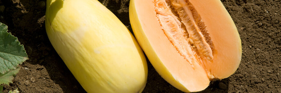 Two oblong crenshaw melons, one shown whole and one cut open to show the orange flesh.