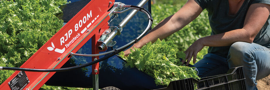 Person using our greens harvester to harvest baby lettuce.